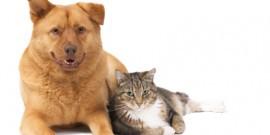 A 3-step pet health plan
